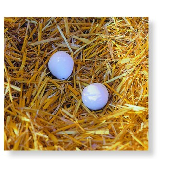 2 x Artificial / Dummy Chicken Nest Eggs