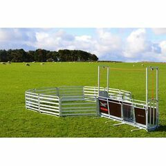 Alligator Small Holder Sheep System