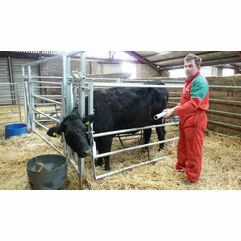 Calf Handling and Equipment