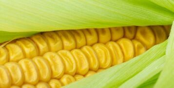 Growing Guide: How To Grow Your Own Sweetcorn