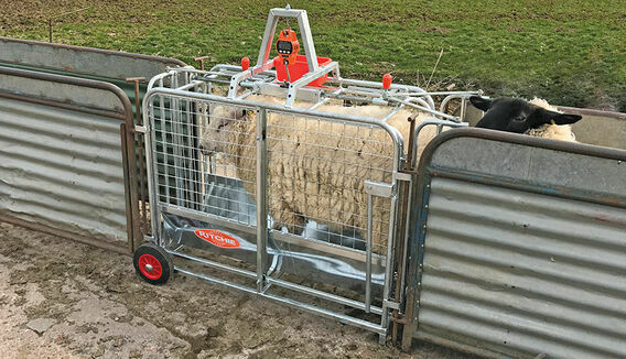 Ritchie Digital Lamb Weigher